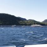 Lysefjord 022