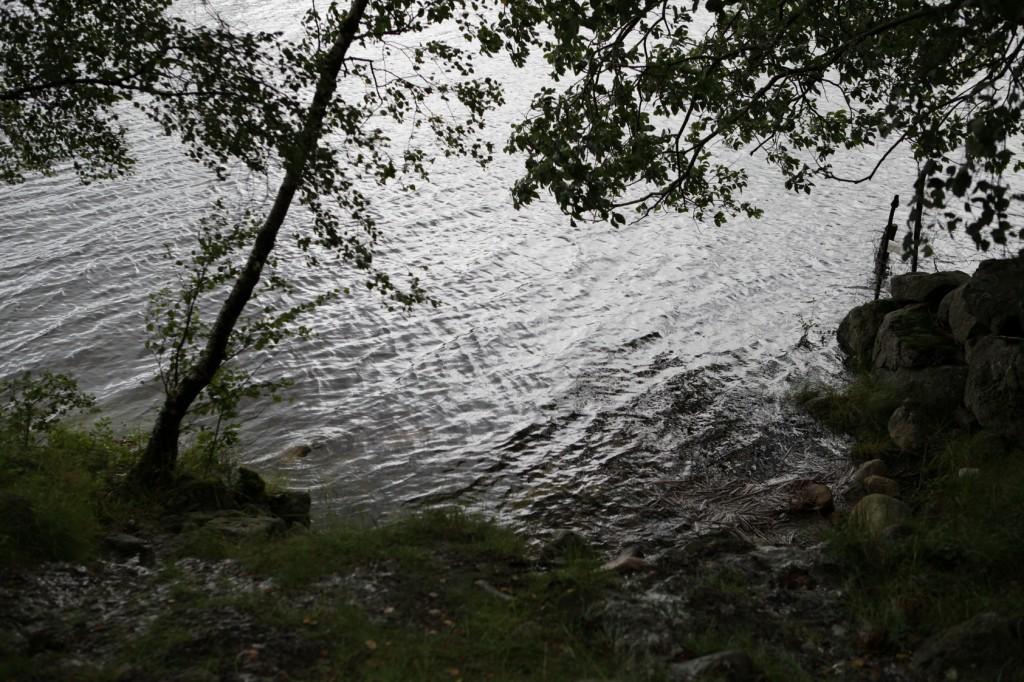 Selandsskogen_17