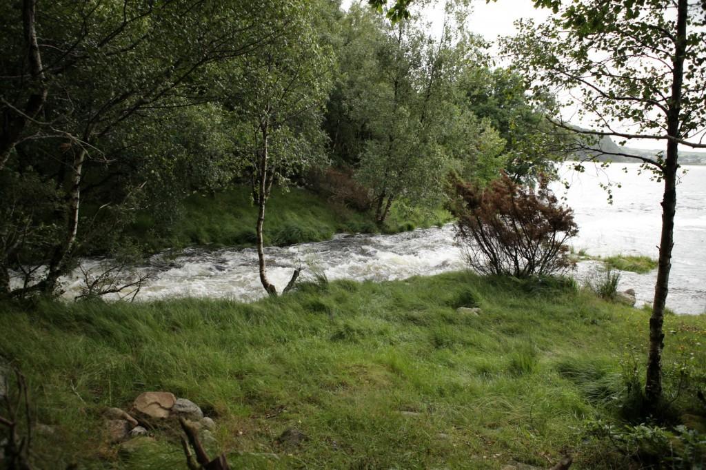 Selandsskogen_24
