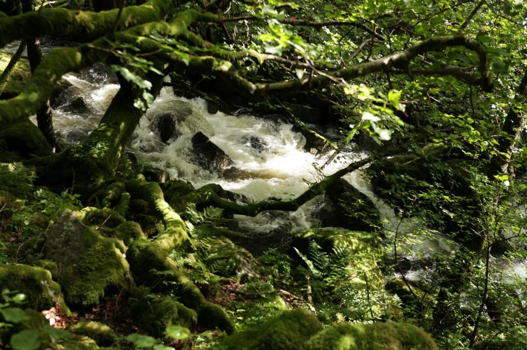 Selandsskogen_34