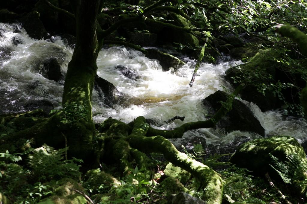 Selandsskogen_36