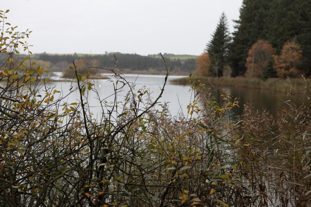 Njåskogen_04