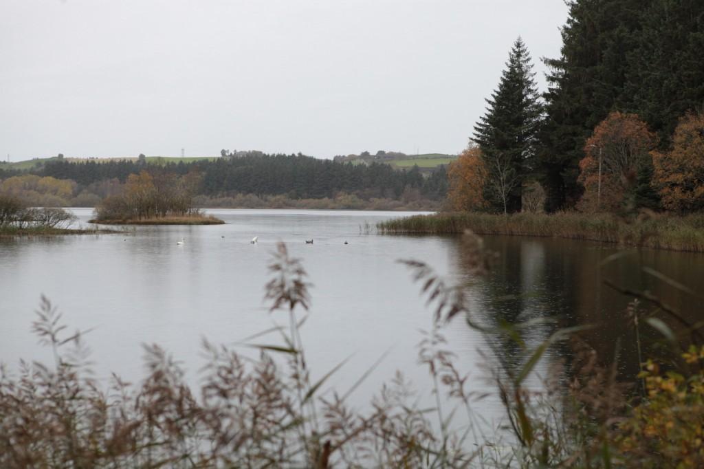 Njåskogen_05