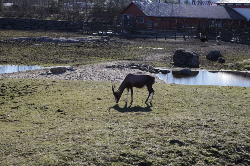 Kristiansand_Dyreparken_006