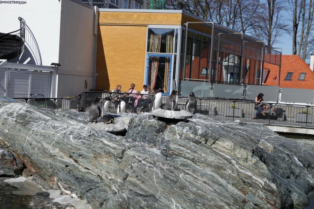 Bergen_092