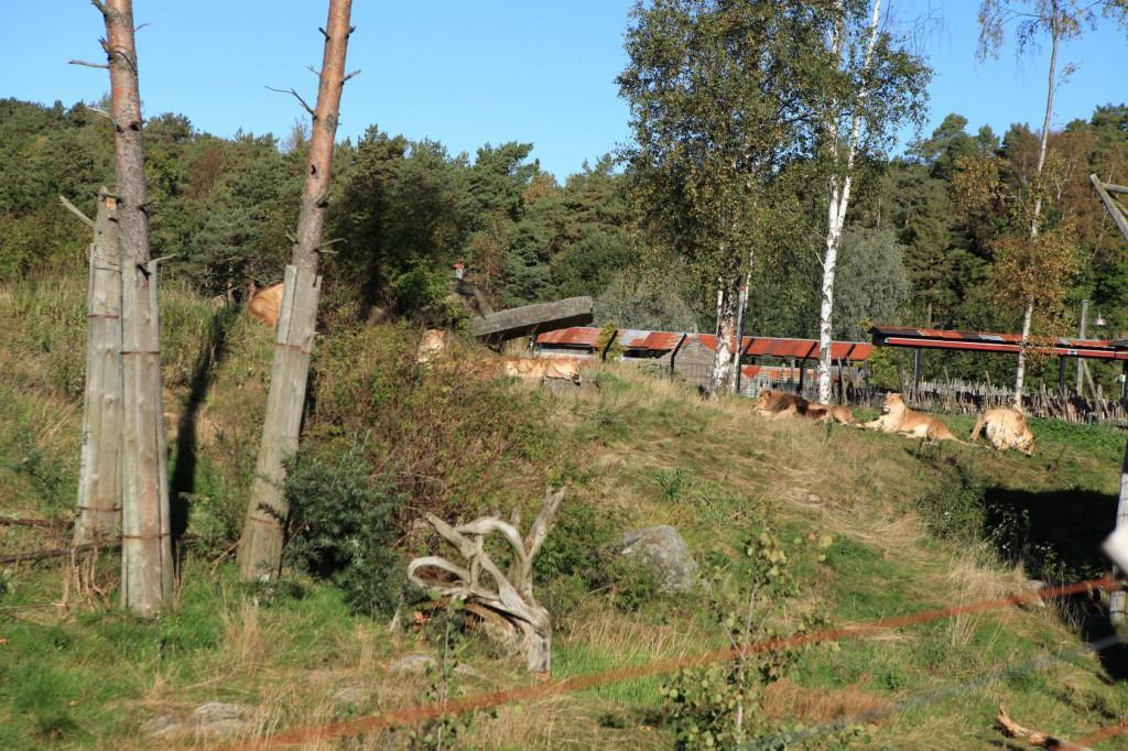 Kristiansand_Dyreparken_24
