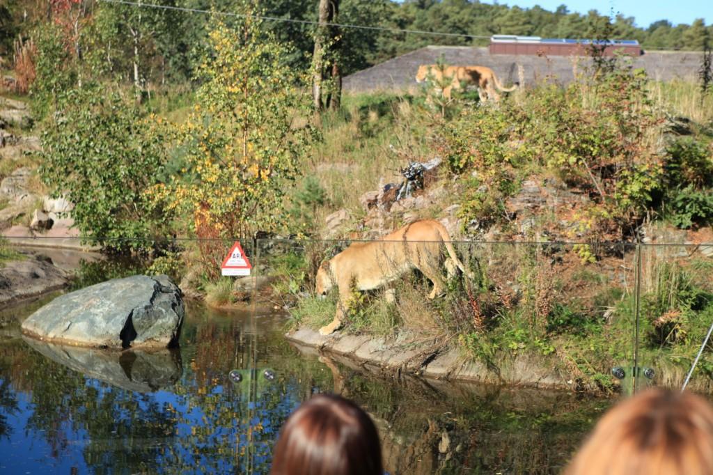 Kristiansand_Dyreparken_36