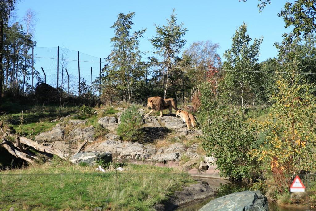 Kristiansand_Dyreparken_37