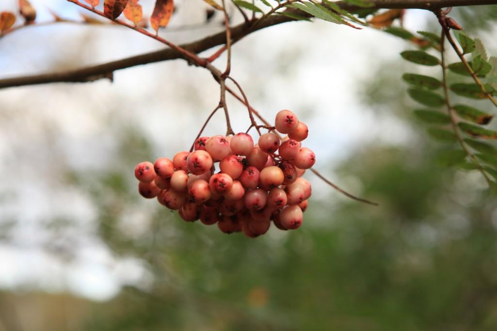 autumn_stavanger_09