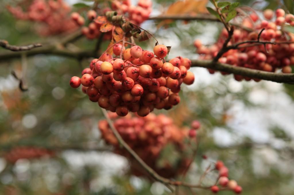 autumn_stavanger_10