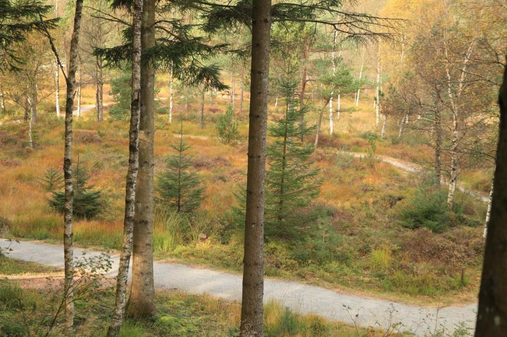 autumn_stavanger_12