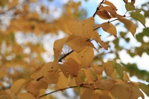 autumn_stavanger_14