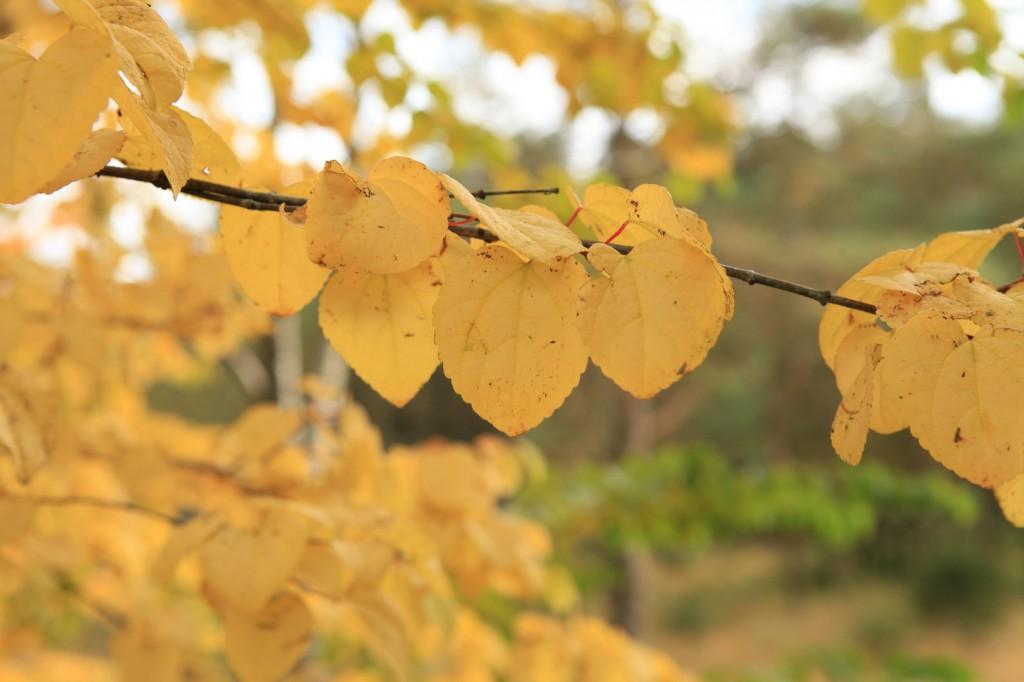 autumn_stavanger_15