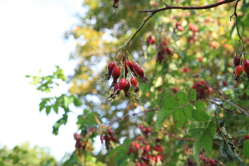 autumn_stavanger_17