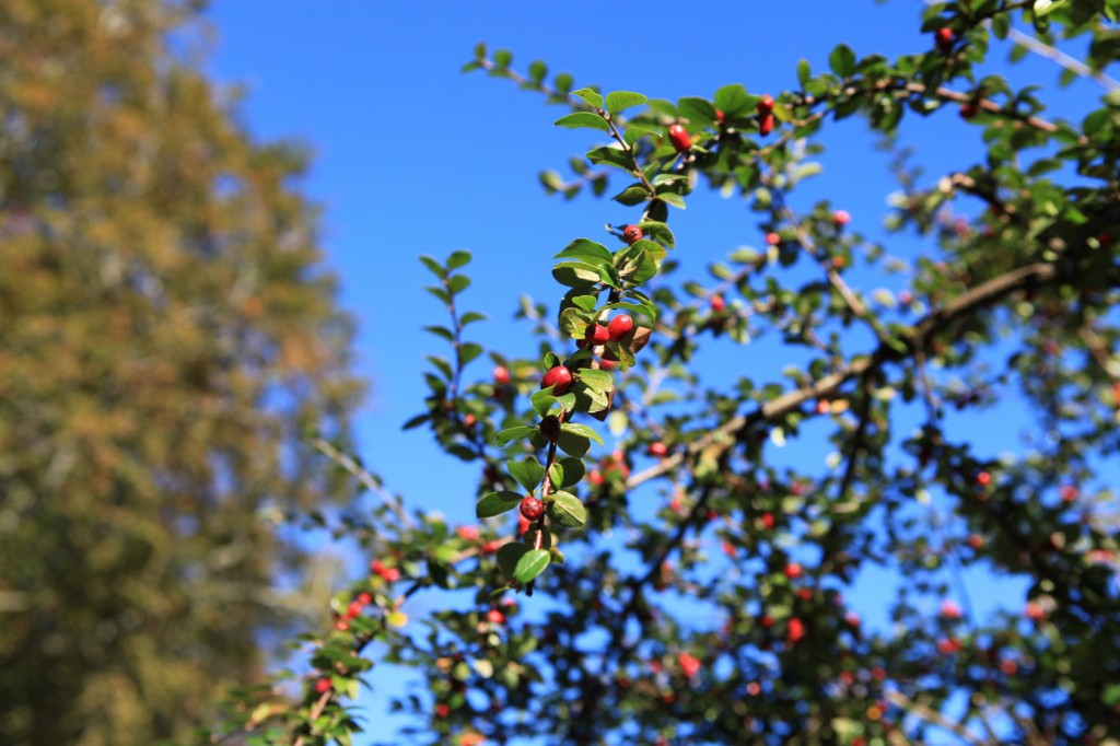 autumn_stavanger_36