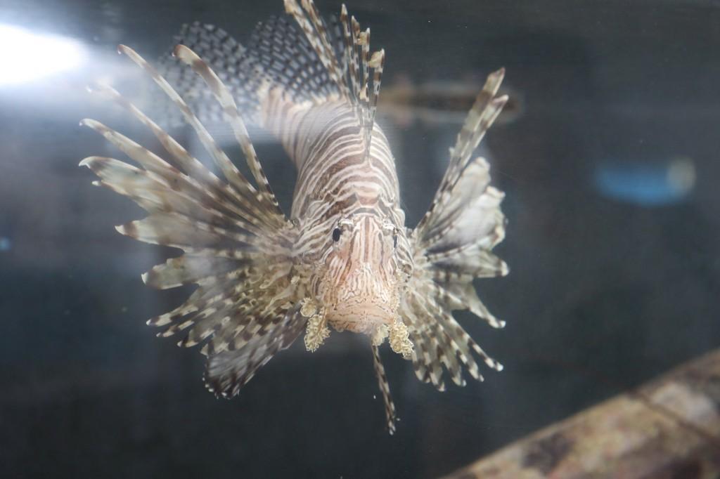 002 068 Curacao Sea Aquarium_resize
