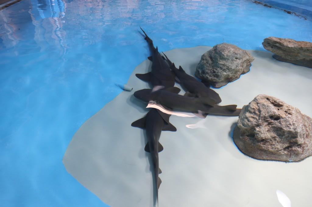 003 069 Curacao Sea Aquarium_resize