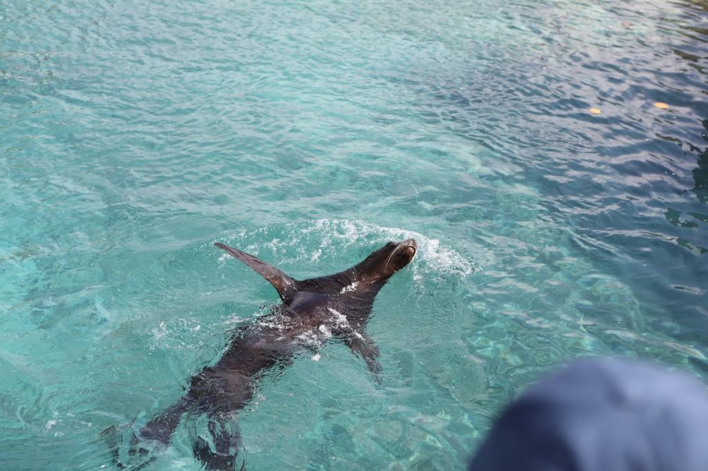 004 070 Curacao Sea Aquarium_resize