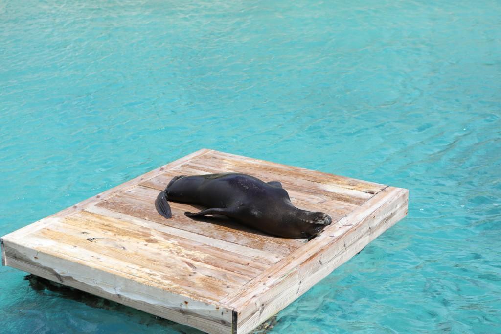 005 071 Curacao Sea Aquarium_resize