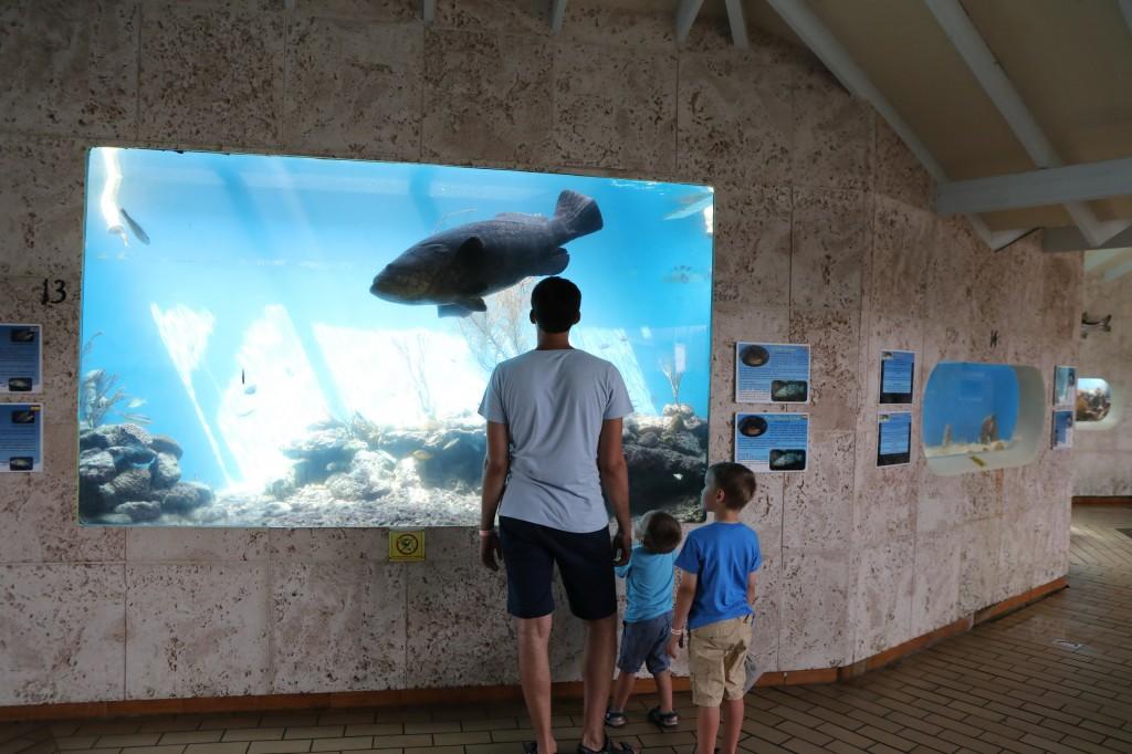 007 073 Curacao Sea Aquarium_resize