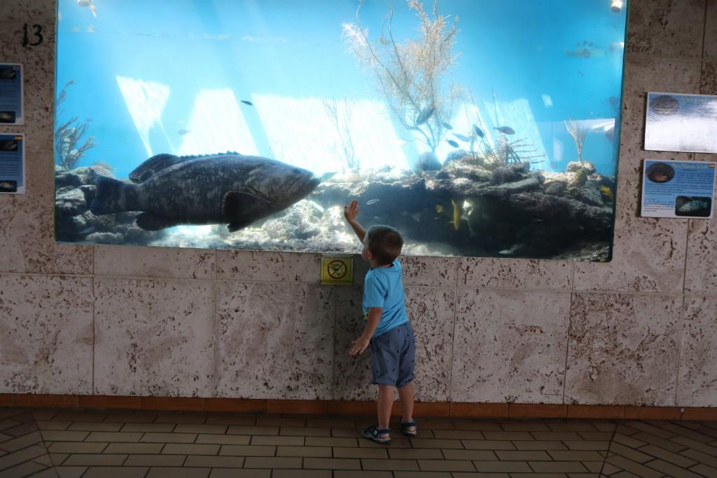 008 074 Curacao Sea Aquarium_resize