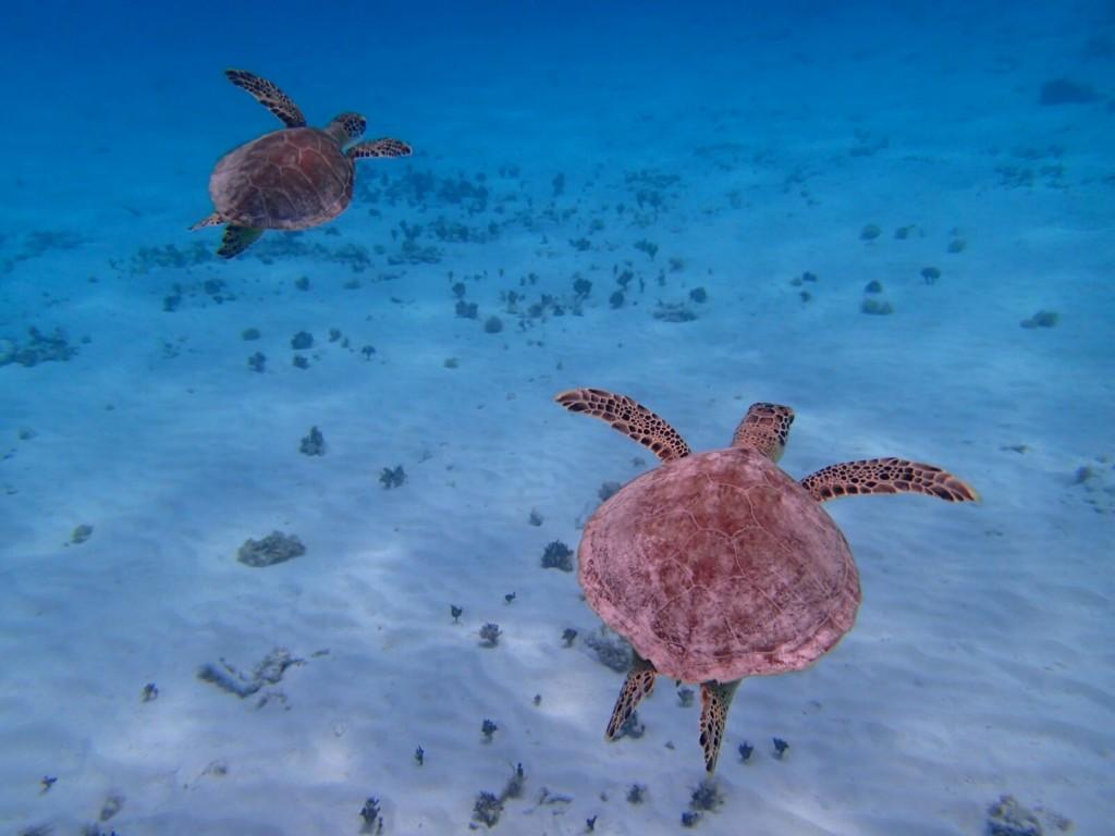 009 195 Under sea