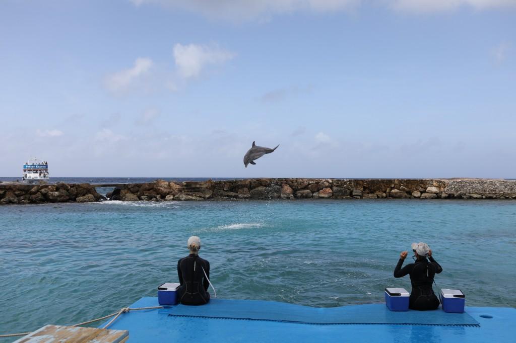 011 077 Curacao Sea Aquarium_resize