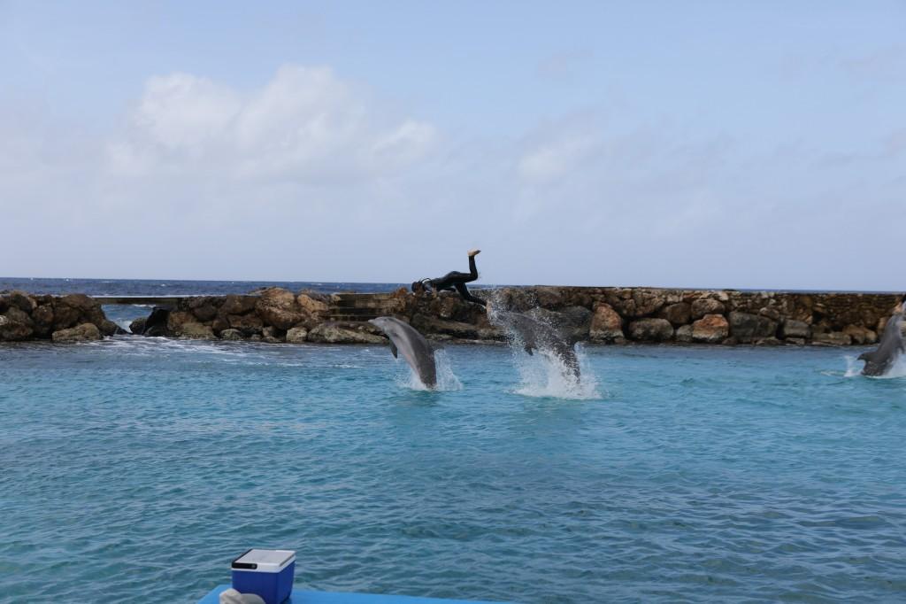 013 079 Curacao Sea Aquarium_resize