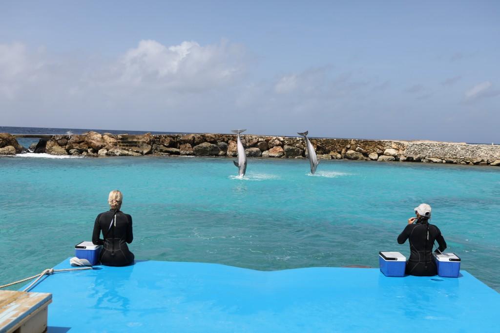 014 080 Curacao Sea Aquarium_resize