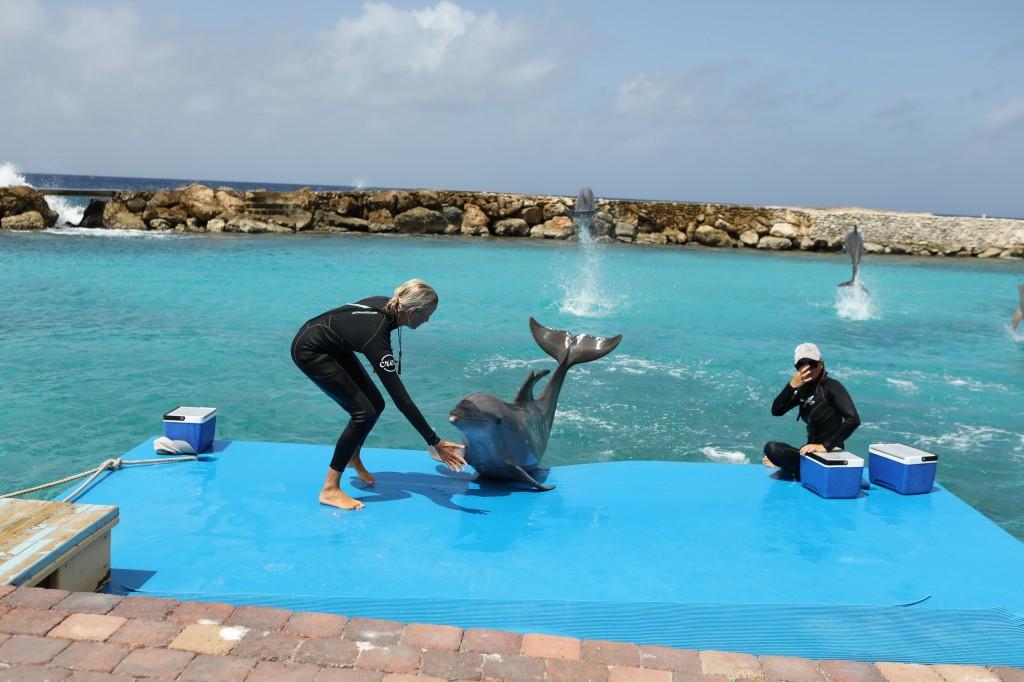 015 081 Curacao Sea Aquarium_resize