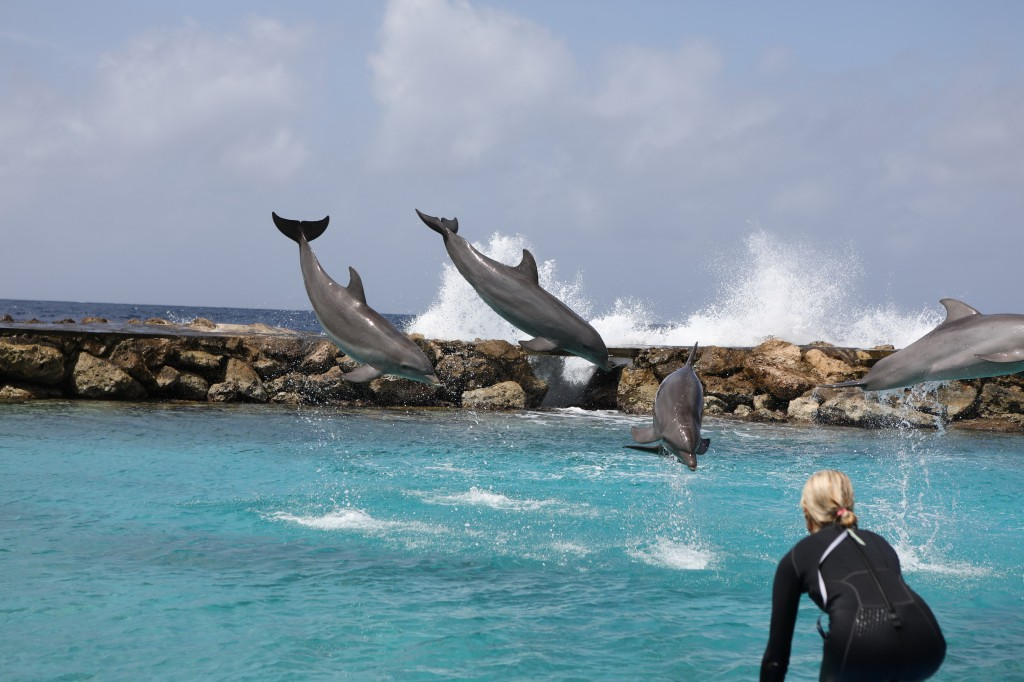 017 083 Curacao Sea Aquarium_resize