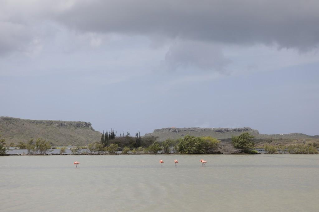 017 252 Playa Porto Marie_resize