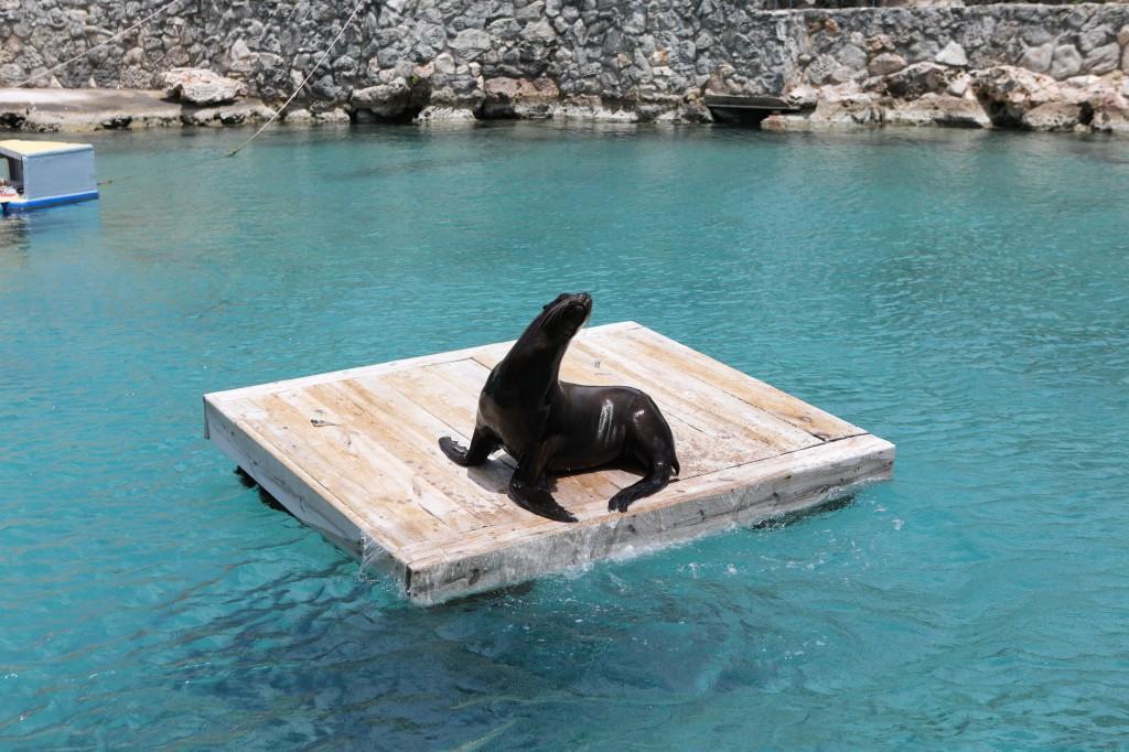 019 085 Curacao Sea Aquarium_resize
