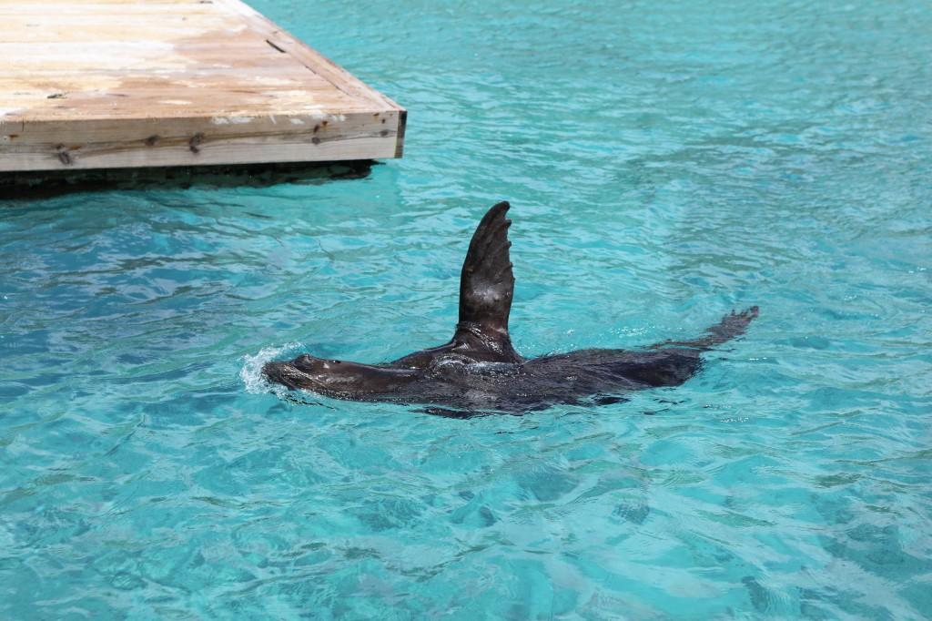 020 086 Curacao Sea Aquarium_resize