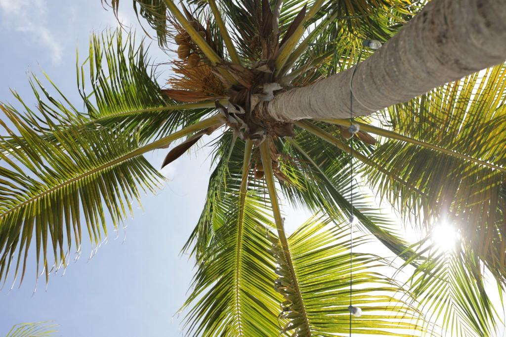 020 129 Mambo Beach_resize