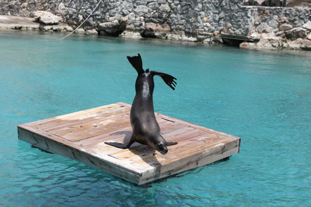 022 088 Curacao Sea Aquarium_resize