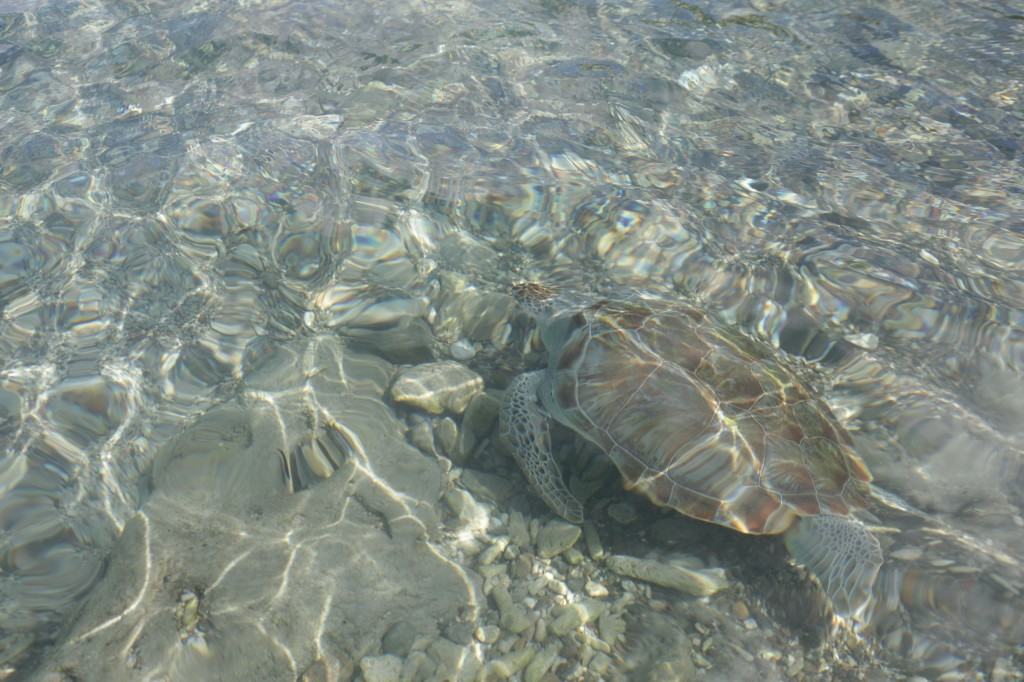 022 301 Turtles and west beaches_resize