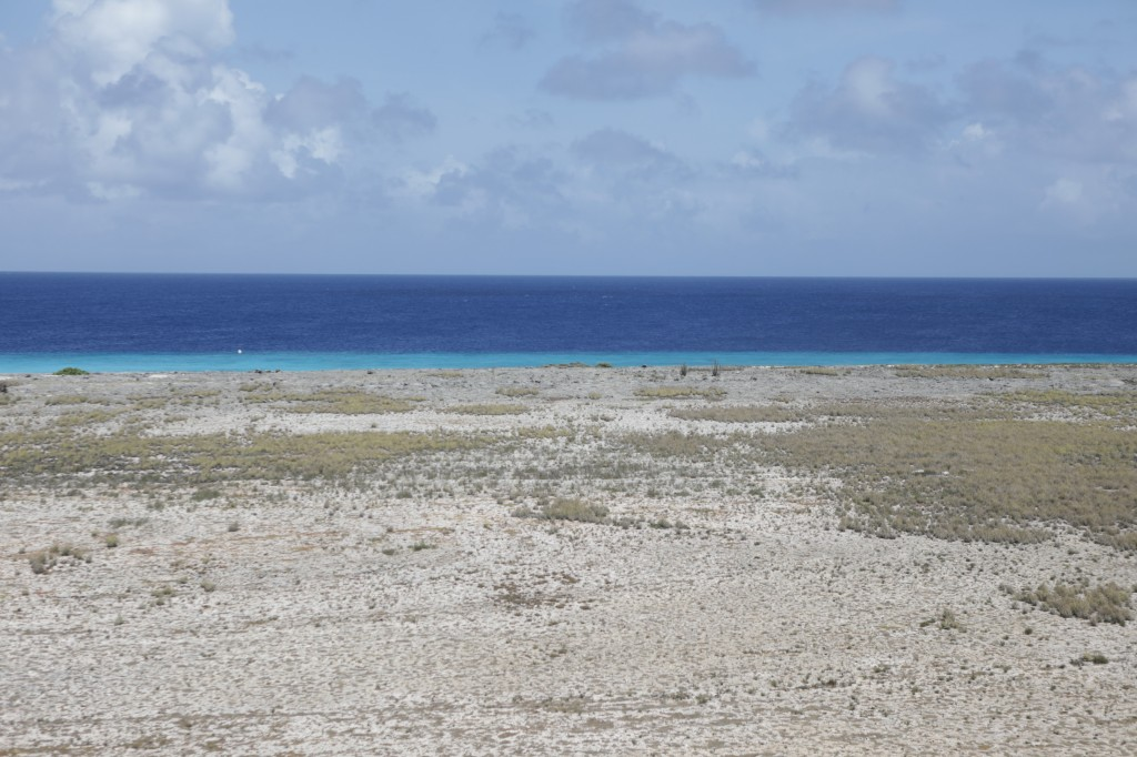 028 231 Klein-Curacao_resize