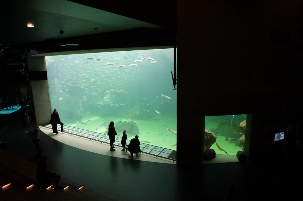 Oceanarium_09